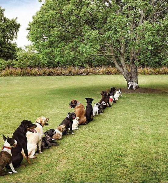 Dogs waiting in line